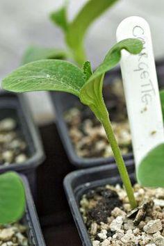 sowing in pots with label Source Potager Bio, Interior Design Minimalist, Sustainable Design, Horticulture, Garden Art, Bonsai, Garden Landscaping, Planters, Landscape