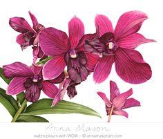 "Cooktown Orchid © 2008 ~ ~ annamasonart.com 61 x 46 cm (24 ""x 18"")"