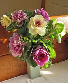 ornamental kale bouquet using purple and white varieties...