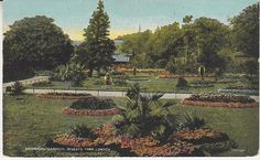G D & D Postcard - Botanical Gardens, Regents Park, London - Star Series   PC01287