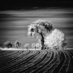 Trees by Piotr Krol, via 500px