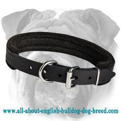 Reliable #English #Bulldog #Padded #Leather #Collar $19.90   www.all-about-english-bulldog-dog-breed.com