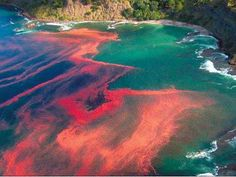 Red tide.  I have seen this in California...it's fluorescent at night.  It's due to the amounts of mercury in the water.