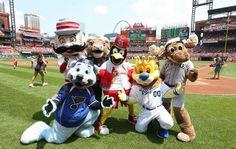 Fredbird and friends celebrating his birthday at Busch Stadium.