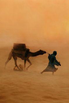 Sahara Desert Sandstorm, Photo by Steve McCurry Desert Dunes, Camelus, Desert Life, Arabian Nights, People Of The World, Deserts, Scenery, Journey, Pictures