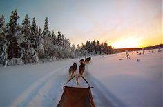 Schlittenhunde-Urlaub in Lappland - Åsele