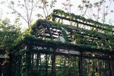 Abandoned greenhouse, Franklin Park, Boston, MA.