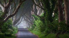1920x1080 Trees Road Trunk Plant Ireland