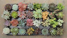 cuia de barro para plantas - Pesquisa Google