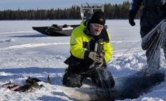Hydrokopterilla liikkuva kalastaja verkoilla talvella Pellon Miekojärvellä