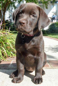 Piper the Labrador Retriever, explain the word VET one more time.......