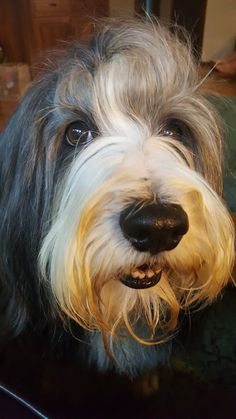 Large BEARDED COLLIE chalk board kennel sign birthday xmas present gift