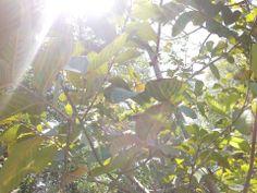Fotografía. Él entre los árboles. Plant Leaves, Plants, Pictures, Plant, Planets