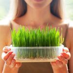 Sucul de Iarba de Grâu – Băutura Miraculoasă a Andreei Marin | La Taifas Good To Know, Celery, Diet, Fresh, Vegetables, Healthy, Pandora, Food, Drinks