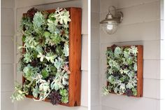 Succulent frame for front of house