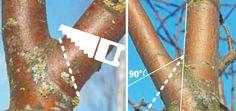 Вырезка на кольцо (слева) и удаление ветви с острым углом (справа)