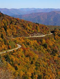 Get Asheville fall foliage forecast and timeline 2020 with plenty of updates, scenic drives, festivals, places to see in the Blue Ridge and Great Smoky Mountains of North Carolina. Blue Ridge Parkway, Blue Ridge Mountains, Nc Mountains, North Carolina Mountains, Great Smoky Mountains, Appalachian Mountains, South Carolina, Places To Travel, Places To See