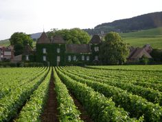 The consensus is that 2015's red vintage will make an impression as Burgundy en premeur tastings prepare to get underway next week, with many wineries benefitting from picking early and mitigating the effects of a hot summer.