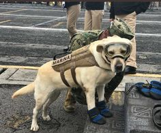 """This is """"Frida"""" she has saved 52 people so far in Mexico's Earthquake / it's true/ LOL marina = navy, gosh the info is correct."""