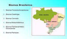 Principais Biomas do Brasil: Floresta Amazônica, Caatinga, Cerrado, Pampas, Mata Atlântica, Pantanal e Mangues