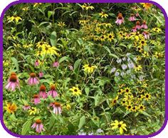 Flowers for Honeybees | flowers and pollinators