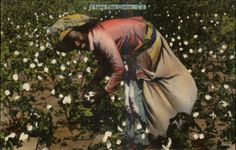 Black Americana Woman Picking Cotton Linen Postcard