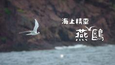 Terns in Hong Kong 海上精靈 - 燕鷗