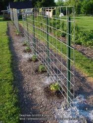 16 Feet Long By 4 Feet Wide Galvanized Steel Hog Panels Farm