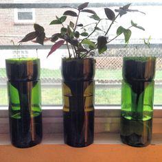 Self-Watering Wine Bottle Planter