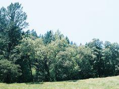 trees, napa, sasha ritter