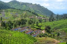 Just Driving – Through beautiful Valparai tea estates ,rich idamalayar reserve forest and Athirappilly