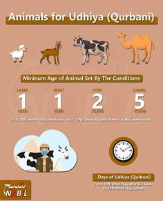Eid Collection, One Year Old, Camel, Islam, Cow, Camels, Cattle, Bactrian Camel