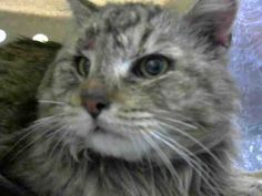 ID#A445769  I am described as a male, brown tabby Domestic Mediumhair mix.  The shelter thinks I am about 5 years old.  I have been at the shelter since Feb 10, 2015 and I may be available for adoption on Feb 14, 2015 at 10:53AM. If you are interested in me, please visit me before this date.  If you think I am your missing pet, please call or visit right away.