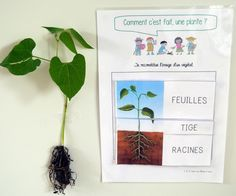Project: all in kindergarten PS - Mary Martinez Flowers For You, Types Of Flowers, Montessori, French Classroom, Petite Section, Orchid Care, Garden Soil, Plantation, Teaching Tools
