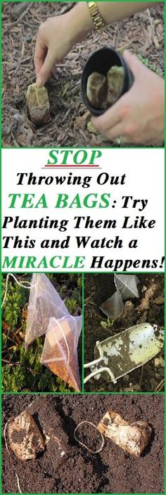 You probably throw away the tea bags after you drink your tea, but this will change after you read this article. #bags #gardening