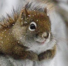 I Sure Could Use Some Mittens! #squirrel #winter #cute