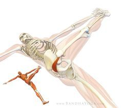 fitness The Daily Bandha: Healing with Yoga: Piriformis Syndrome Loved and pinned by www. Iyengar Yoga, Hip Pain, Back Pain, Syndrome Pyramidal, Psoas Release, Piriformis Syndrome, Sciatic Pain, Sciatic Nerve, Sciatica Yoga