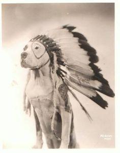 #pitbulltruth #beast #cutepitbulls #pitbulldogs #doglover