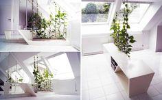 séparation de pièce avec des plantes vertes