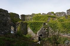 Hundreds of years of growth cover the ruins of Castle Tioram