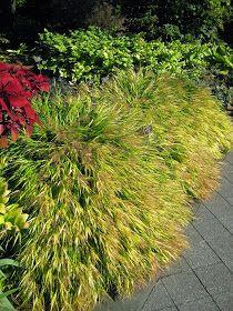 Golden Forest Grass For Impact Rockery Garden, Garden Landscaping, Ornamental Grasses For Shade, Shade Grass, Botanical Gardens, Herbs, Landscape, Rotary, Modern