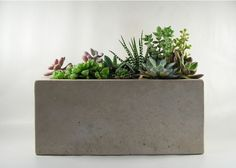 Handcrafted in Pennsylvania by Rough Fusion. This concrete planter has a simple, minimalist design and is the perfect planter for a grouping of succulents. The planter is grey in color and has a class