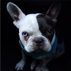 Puppy Friday: Meet Tron