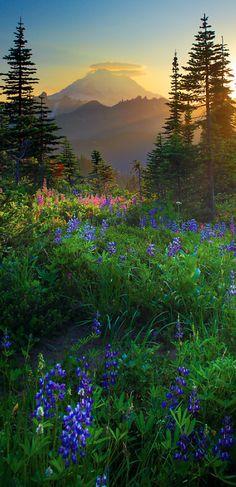 Mount Rainier sunburst east of Seattle, Washington • photo: Inge Johnsson on RedBubble