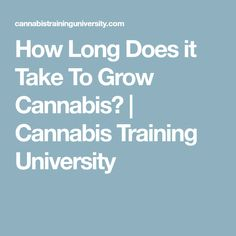 How Long Does it Take To Grow Cannabis? | Cannabis Training University