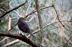 Staglands Wildlife Reserve, Akatawara Valley, Upper Hutt, Wellington, New Zealand What species of bird is this? Bird Species, New Zealand, Wildlife, Birds, Black And White, Children, Photography, Animals, Young Children