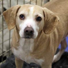 Bashful - SPCA of Texas (McKinney)