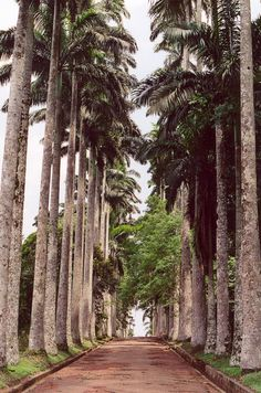 Aburi Botanical Gardens and Palm Trees in Aburi