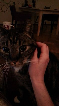Snoes Cat | Pawshake Amsterdam