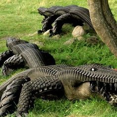 Alligator tires by artist Eric Langert will surely keep your garden pests away-keep more than pests away around here!  The neighbors would flip to walk out and see this in the backyard!